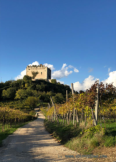 Tower of a castle surrounded by vineyards