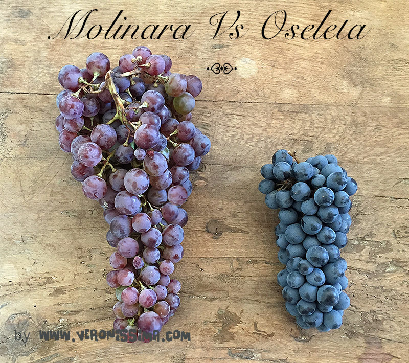 Two bunches of grapes for Valpolicella wine