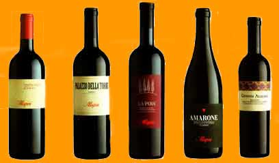 allegrini wines